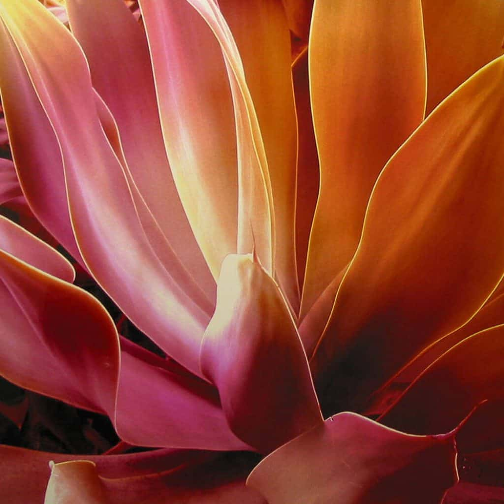 Photograph of red tinted agave created by DIG53 as commercial art