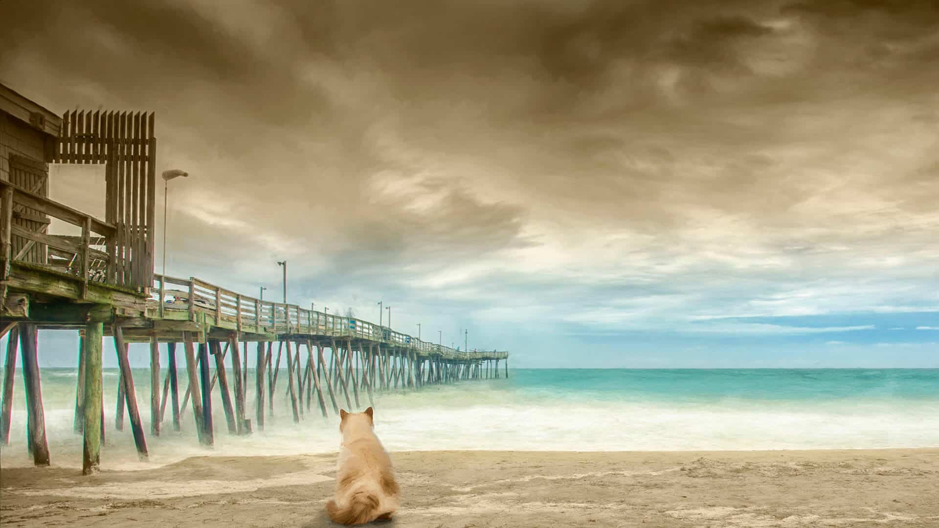 Commercial art of cat sitting on North Carolina beach by DIG53