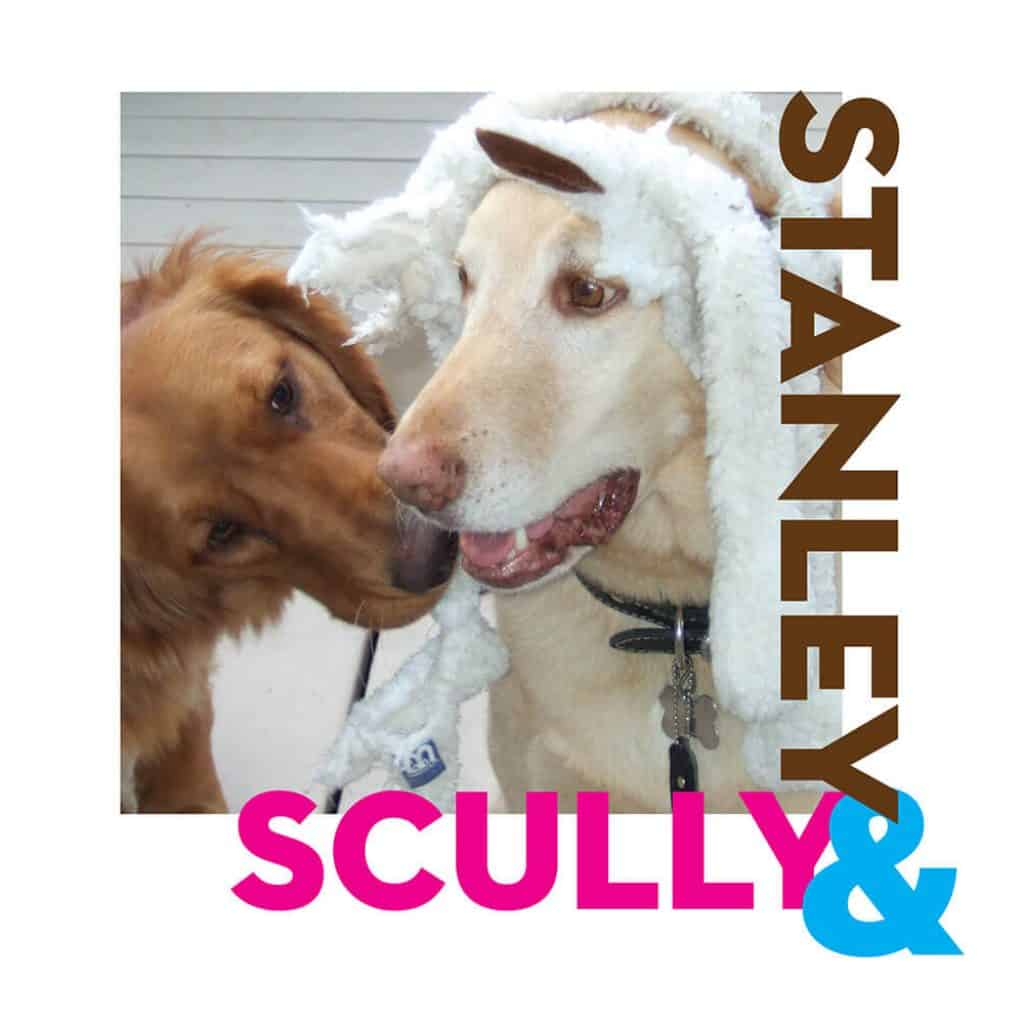 Dogs Stanley and Scully in a photo together.