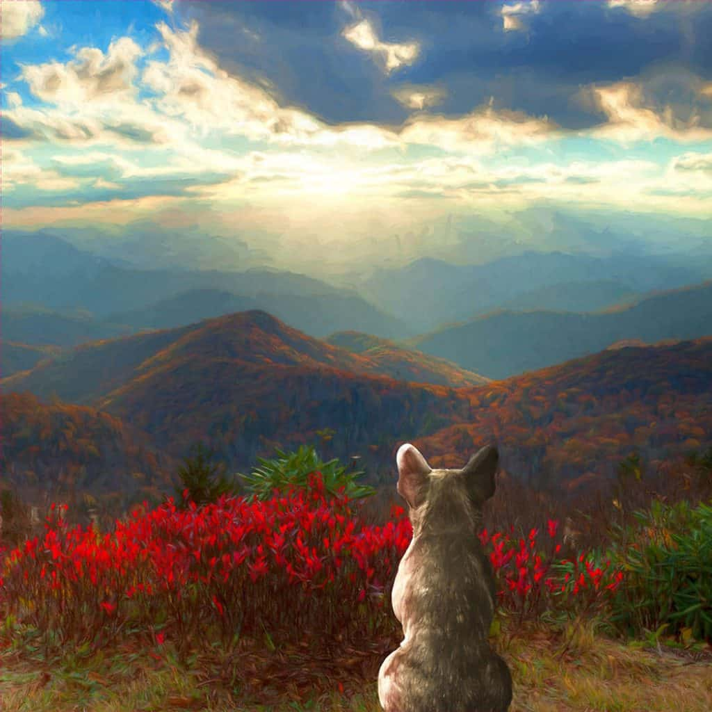 Photo of bulldog infant of red flowers, mountains, and sun breaking through the clouds.