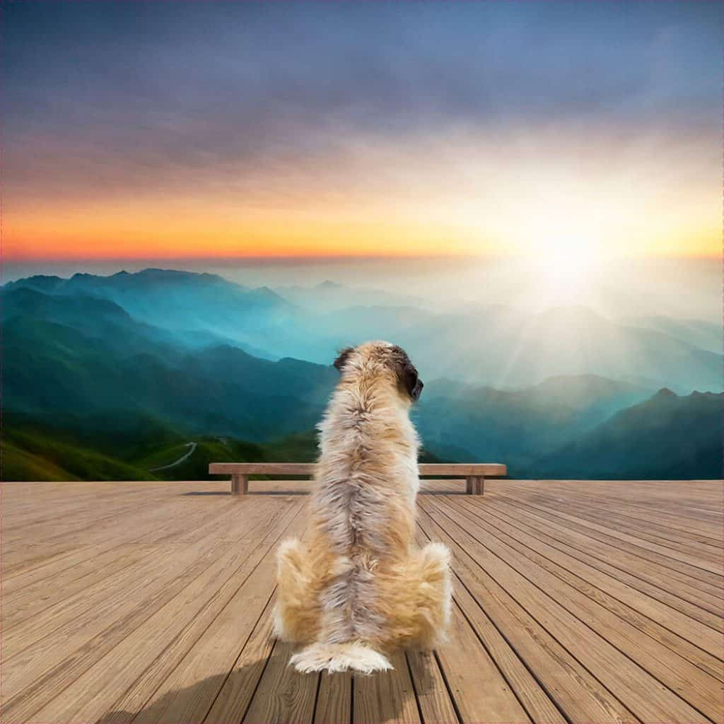 Shaggy dog composited infant of sunrise. Pet portrait by DIG53.